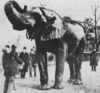 2006_elephant.jpg